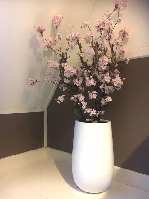 Bloesemboom Favorite, 155 hoog! Te bestellen in verschillende kleuren. UITVERKOCHT