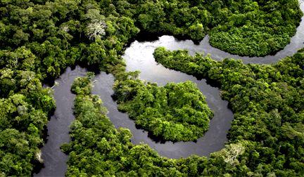 Floresta da Amazônia