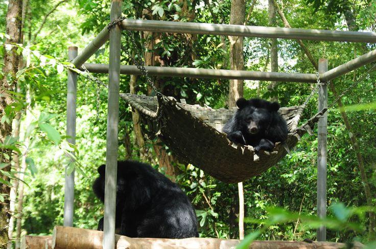 Bär im Cat Tien Nationalpark - #AsiaticaReisen