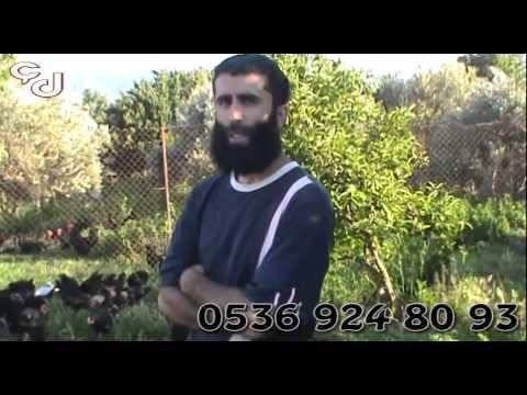 Australorp Üretim Çiftliği Menemen İzmir - YouTube