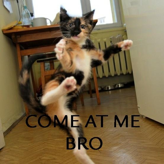 LOL: Kungfu, Animal Pictures, Funny Pictures, Funny Cat, Kung Fu, Ninjas Cat, Bruce Lee, Funny Animal, Animal Funny