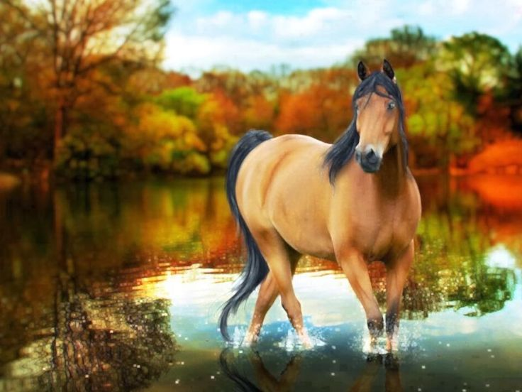 les fonds d cran   un cheval isabelle sur une