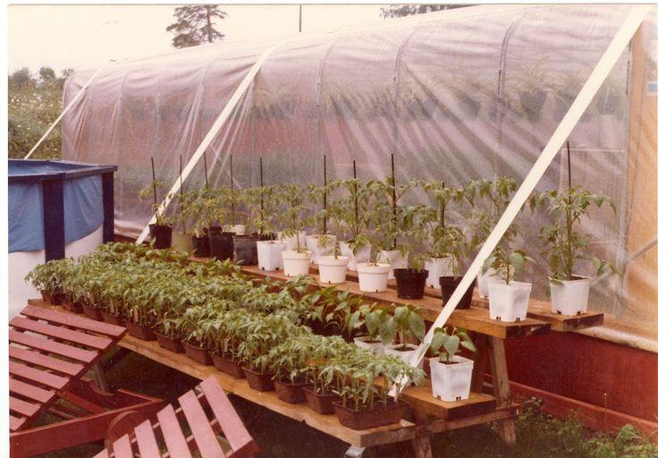 plants prets a planter en pleine terre | Plants, Garden