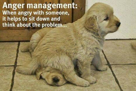 anger managementFunny Dogs, Funny Pictures, Too Funny, So True, So Funny, Anger Management, Good Advice