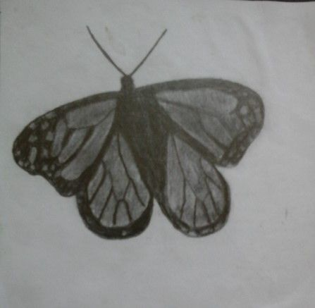 A Butterfly  Una Maiposa  By : Ihzii