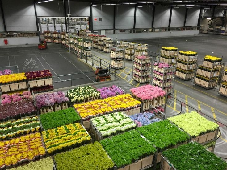 Schiphol Flower Auction outside of Amsterdam. Do not miss on your visit.