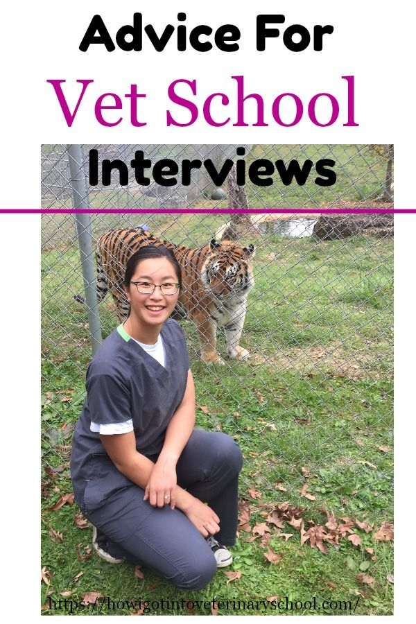 """After making her decision to apply to veterinary school, Tobi used her proximity to the vets she worked with to  """"become the willing recipient of the knowledge they poured out!"""" #vetschool #MSU #vetmed #vetstudent #vettechlife #animallover #ilovecats #veterinarycollege #DVM #college"""