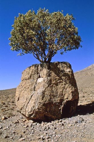 25 Photos Of Weird Trees Growing Out Of Rocks Weird