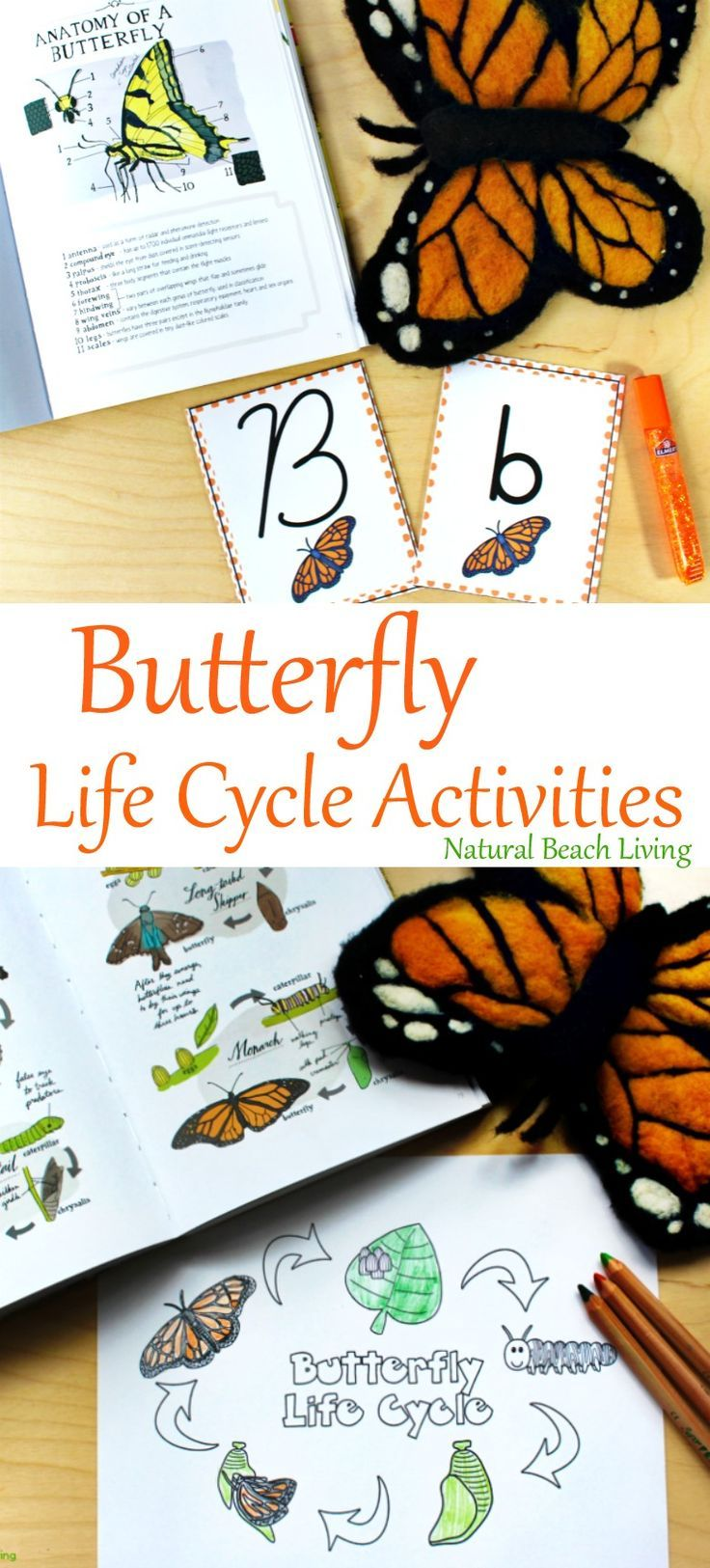 The Best Butterfly Life Cycle Activities For Kids Natural Beach Living Butterfly Life Cycle Activity Life Cycles Activities Butterflies Activities [ 1625 x 736 Pixel ]