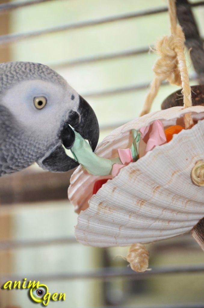 Jouet à fabriquer pour nos perroquets : boîte à secrets de la mer