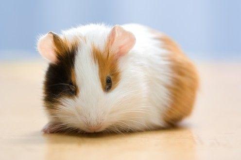 What a cute, fuzzy, little guy!