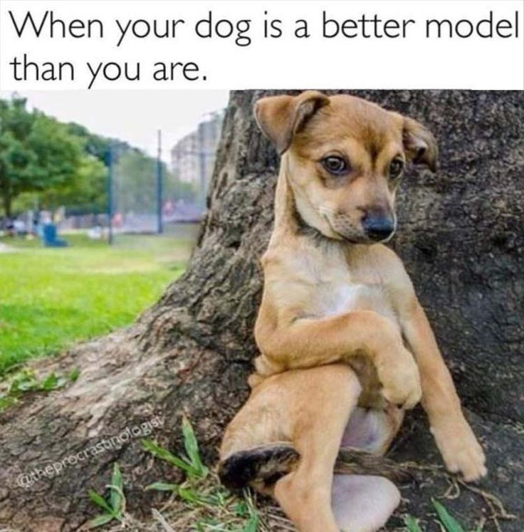 Best Funny Dog Memes Ideas On Pinterest Dog Memes Laughing - Homeless dog found on the streets becomes a lion in this epic photoshoot