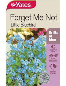 Forget-Me-Not 'Little Bluebird' - Biennial. SHADE - 30cm
