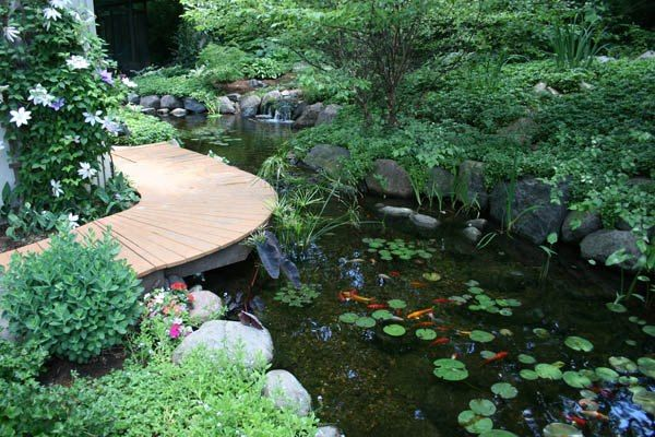 30 best images about koi ponds on pinterest backyard for Koi pool cue