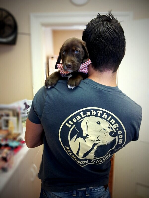FREE SHIPPING Let Everyone know that Labradors are your thing with the Official Its a Lab Thing T-Shirt! Free Worldwide Shipping!! 10% of the proceeds go to or Local Labrador Rescue.