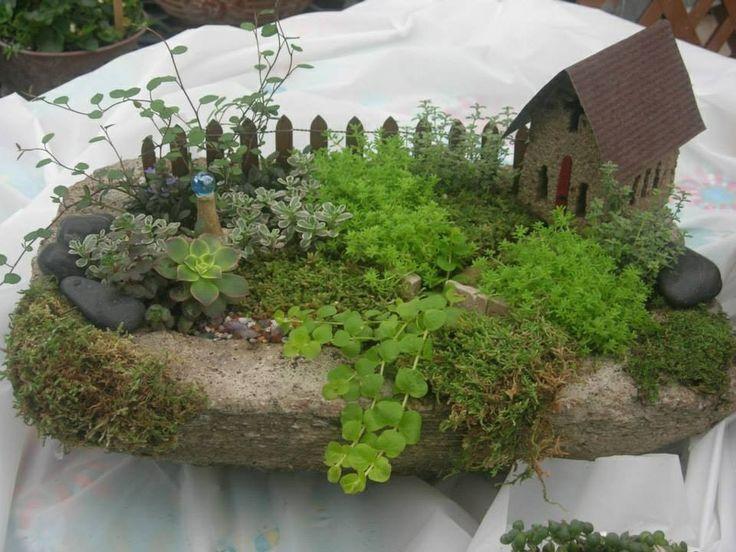 Mimi jardim externo ou interno