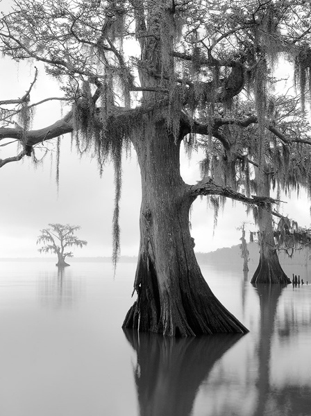"""Along The Shoreline"" - David Chauvin Photography - Maurepas Swamp in Louisiana...love it!:"