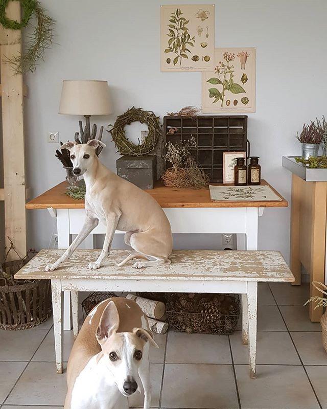 Guten Morgen Ihr Lieben Ich Hoffe Ihr Seid Gut In Den Sonntag Gestartet Wer Von Euch Lebt Auch Mit Hunden Zusammen Decor Entryway Tables Home Decor
