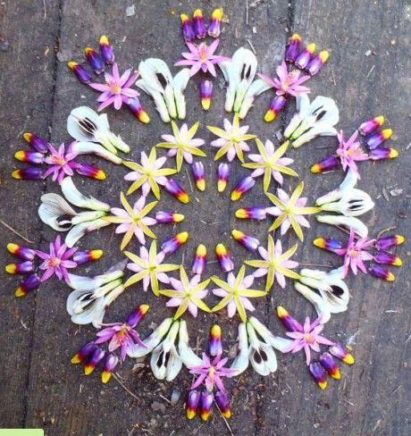 Danmala by Kathy Klein, mandala                                                                                                                                                                                 More