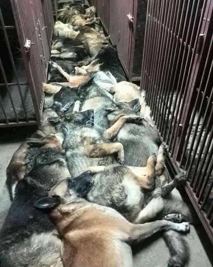 empresa de seguridad yankee mata perros en kuwait