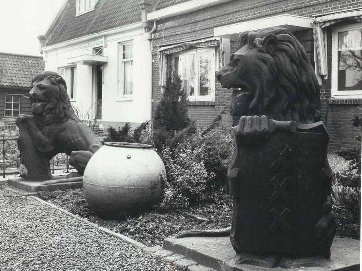 """Buiksloot omstreeks 1965. Amsterdam C.S. Leeuwen op Buiksloot. Deze leeuwen hebben samen de jaren 1929 tot 1969 in Amsterdam-Buiksloot doorgebracht. Ze stonden daar voor het huis van de familie Van Baarsen. Dit huis stond aan de Kanaaldijk 15a op de toenmalige terreinen van de """"N.V. grind- en zandhandel v/h Daan van Baarsen"""", naast de krijtmolen d'Admiraal. http://leeuwencs.nl/wp-content/uploads/2015/06/amsterdam-buiksloot-1933-henny-van-baarsen-album-familie-Van-Baarsen.jpg"""