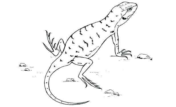 Image Result For Desert Animal Outlines Animal Outline Coloring