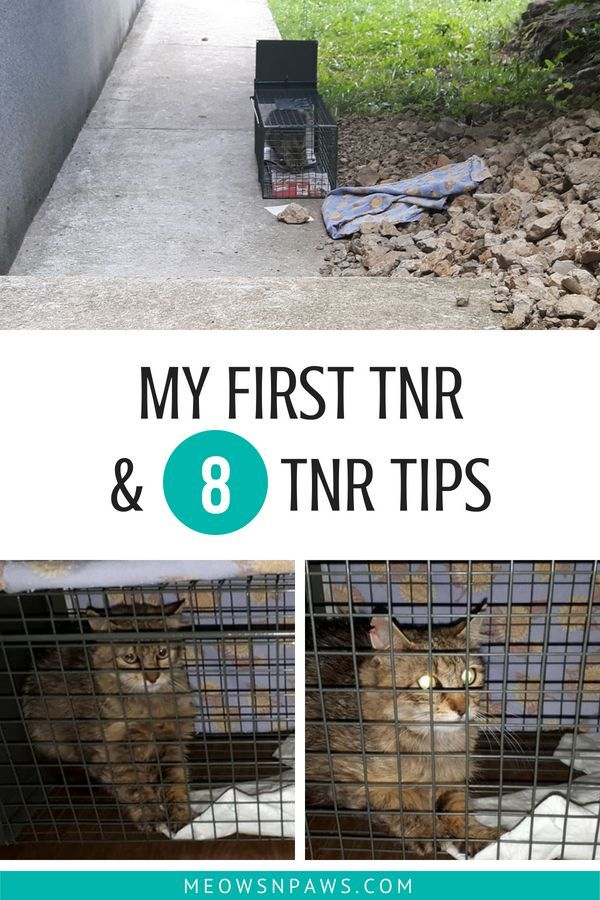 My 1st Tnr Why It Didn T End Well Imo 8 Tips For A Successful