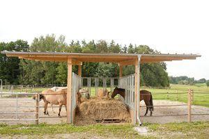 """aktivstall"" livestock group feeding"