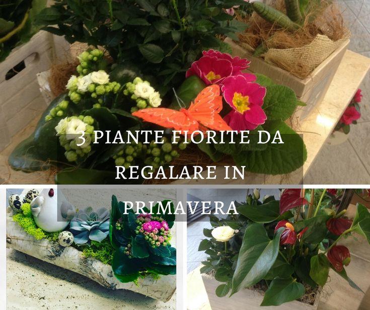 Oltre 25 fantastiche idee su piante da appartamento su - Piante fiorite da appartamento ...