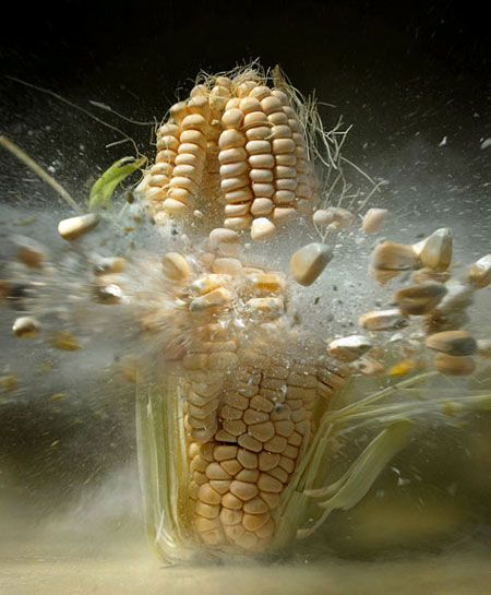High-Speed Still Photography of an Exploding Ear of Corn Photography by Martin Klimas