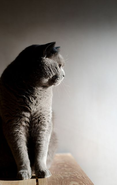 """""""The cat dwells within the circle of his own secret thoughts."""" --Agnes Repplier"""