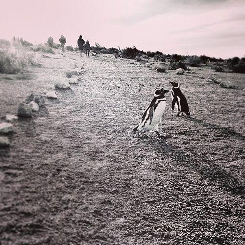 Projeto Mais Amigas/Foto de Claudine Watanabe - Local: Punta Tombo - Patagônia - Argentina #DiaMundialDoTurismo #maisamigas
