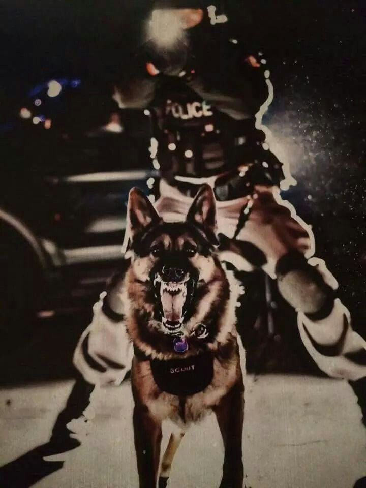 This is the police with a K9, come out with your hands up or you're gonna get bit!