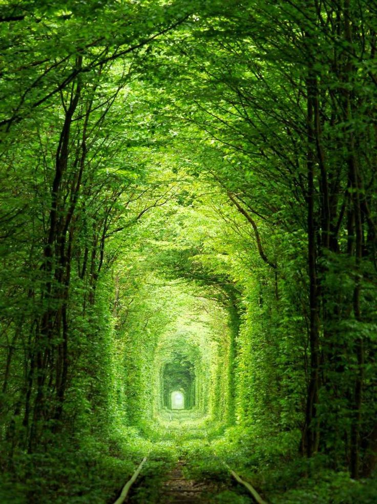 Tunnel-of-Love-in-Klevan-Ukraine