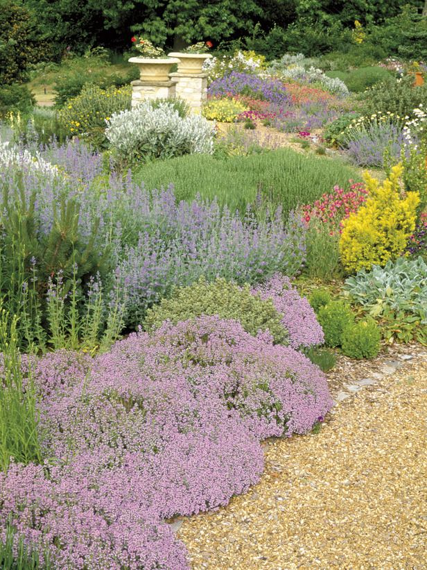 21 best french gardens images on pinterest gardening for Low maintenance border shrubs