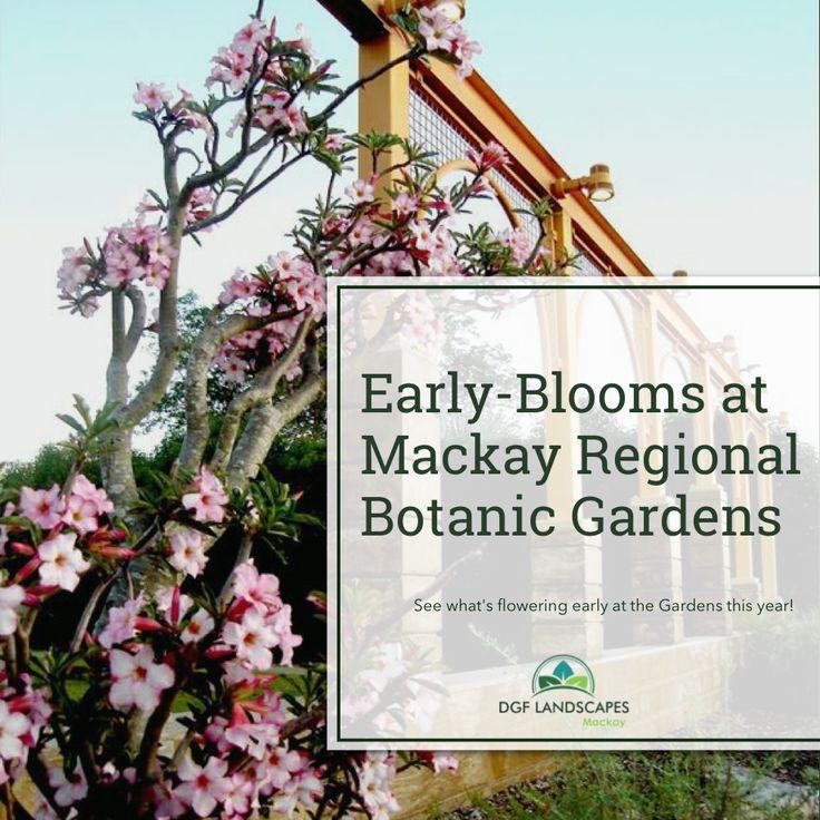Early-Blooms at the Mackay Regional Botanic Gardens   DGF Landscapes Mackay