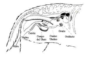 Pin en Anatomía animal