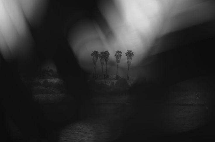 Palmtrees. Ramón Hernández. Fotografía.