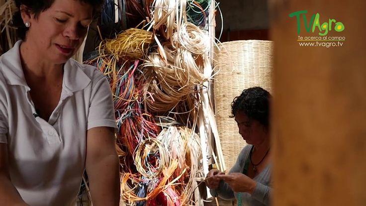 El Arte de la Cestería en Cundinamarca  - TvAgro por Juan Gonzalo Angel