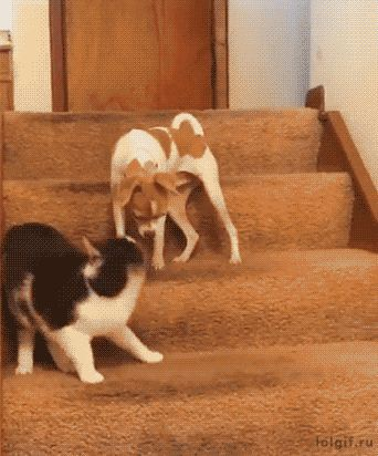 Well that's what happens when the cat is bigger than the dog