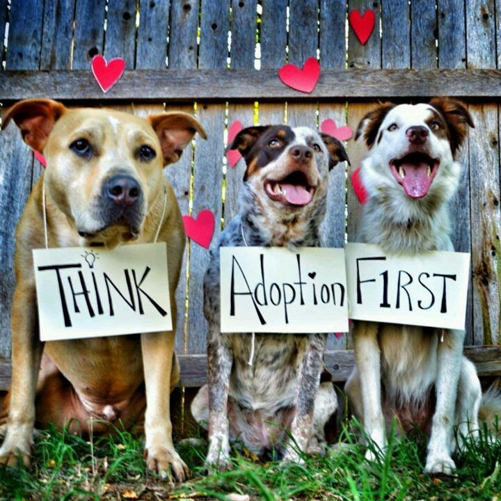 Best Animal Shelter : Best adoption images on pinterest quotes