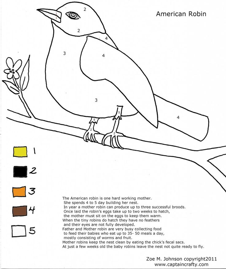 For Wolf Elective 13d Birds Robin Nature Coloring Sheet