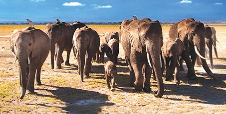 Number 20 ~ See Africa's 'Big Five'