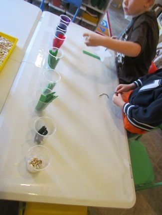 From seed to flower at the sticky table