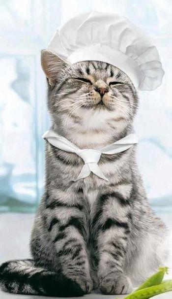 「お魚料理なら任せて!」と言わんばかりの猫さんです。きっと良い腕のコックさんなのですね。