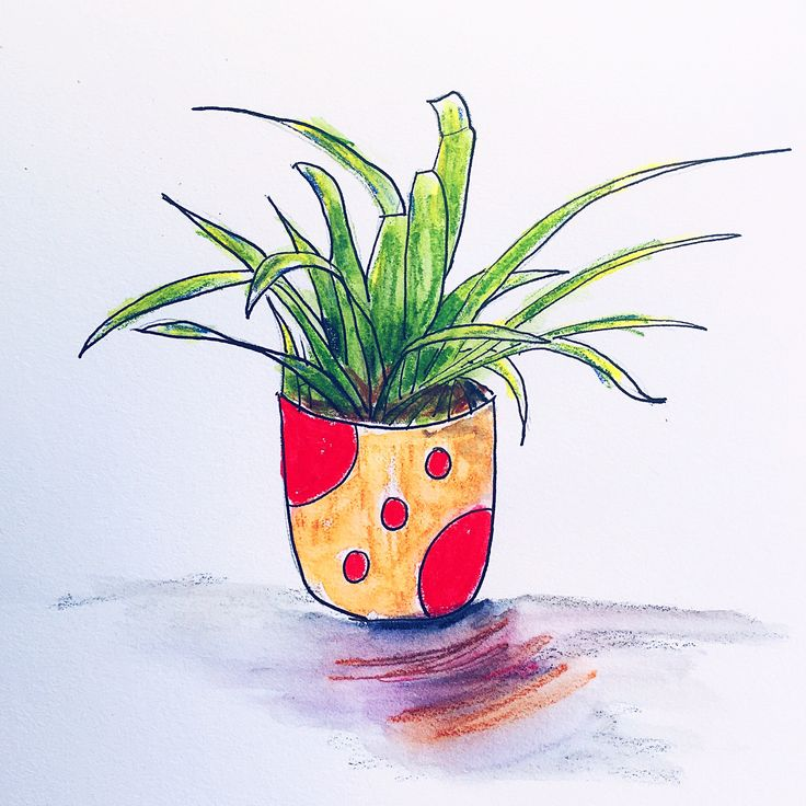 Plant doodle. Bromeliad. Watercolor pencil and ink