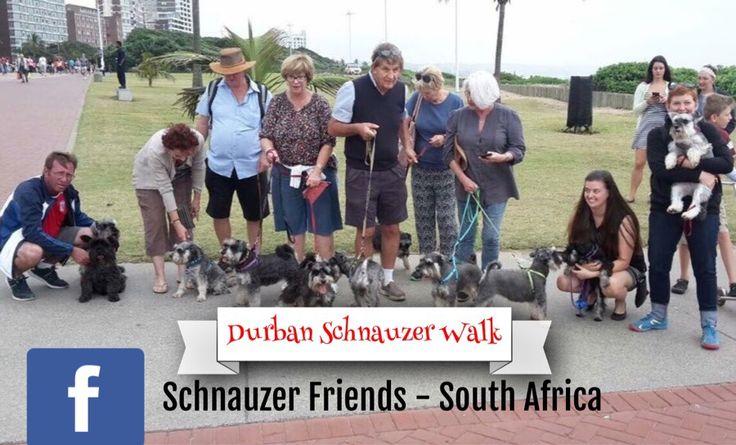 May 7, 2017 Schnauzer Walk @ Durban