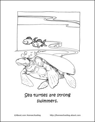 learn about sea turtles with this free printable set word searchsea turtleslanguage artscoloring pagesteaching ideashomeschool - Language Arts Coloring Pages