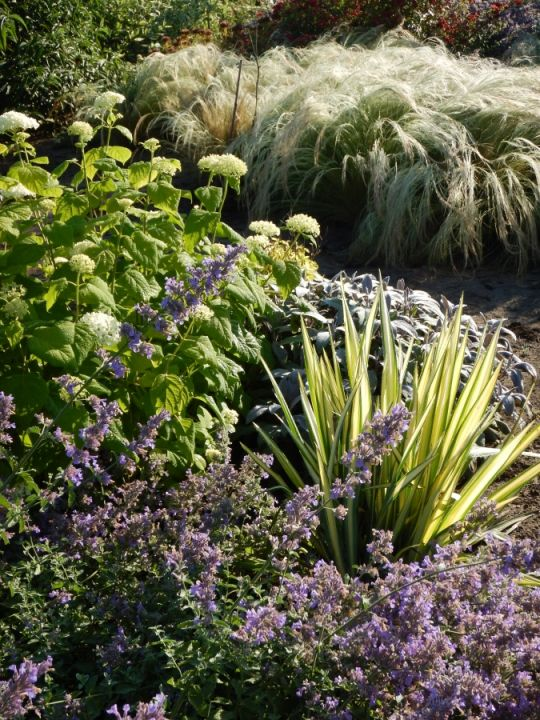 Zengő virágok völgye | Edenpont
