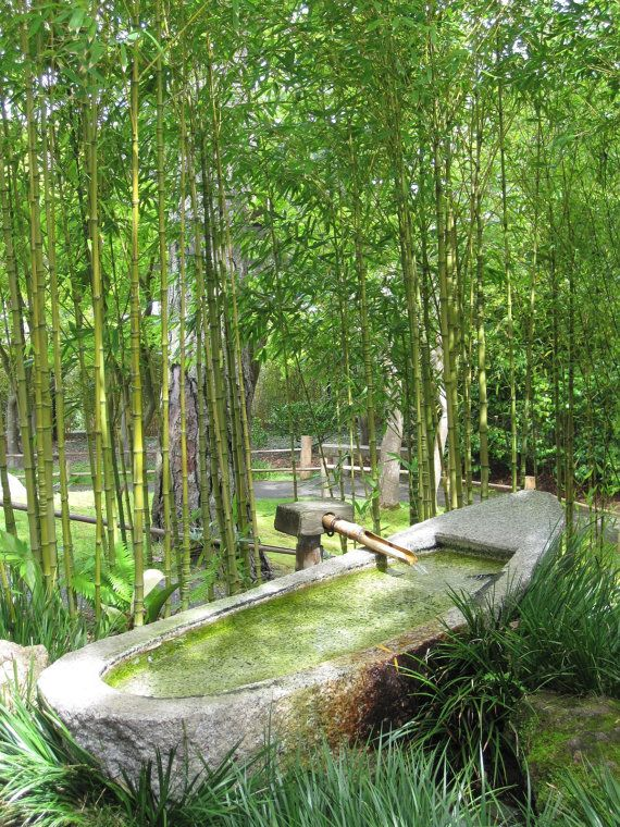 17 Best Images About Backyard Bamboo On Pinterest